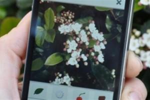 app-identifica-plantas