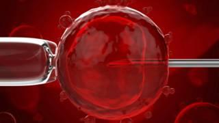 Cientistas conseguiram simular quimicamente o ambiente de um útero para observar embriões. Foto-iStock