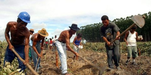 Members of the Brazilian Landless Movement (MST, in Portuguese) and from the Finnish group Stora Enso cut eucalyptus trees on Tuesday 6 April 2004 at an occupied farm in Veracel Celulosa, in the Brazilian state of Bahia. 2500 families occupied the farm and cut more than four hectares of eucalyptus crops that will be replaced by corn and bean crops. Leaders of the MST justified the cutting saying that 'noboby can be fed with eucalyptus trees'.  EPA/CARLOS CASAES BRAZIL OUT === BRAZIL OUT ===
