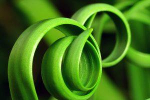 espirais-verdes-naturais