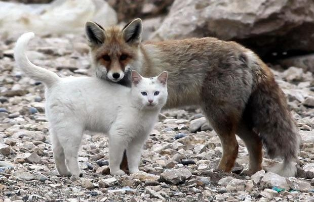 wolf-and-cat