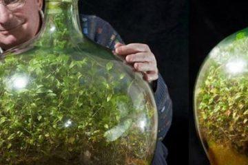 jardim em garrafa