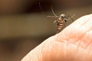 mosquito-febre-amarela-aedes-012017-1400x800